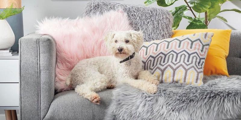perro blanco acostado en un sofá-mascotas Sodimac