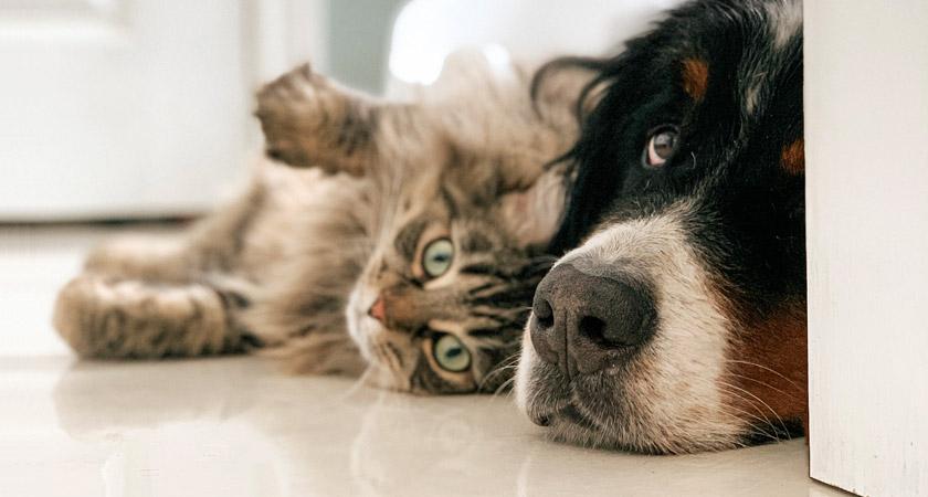 Cómo cuidar a tu mascota del calor en verano