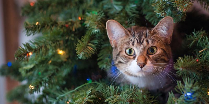 gato en árbol de navidad
