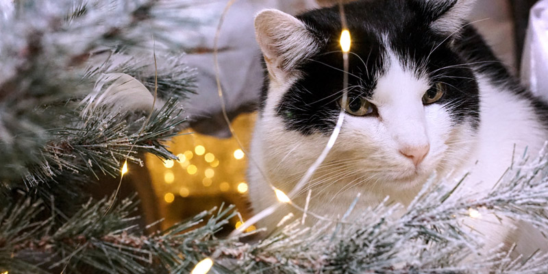 gato sentado al lado del árbol de navidad