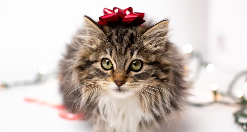 6 ideas para regalar a tu gato en navidad