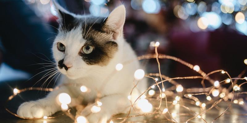 gato blanco entre luces de navidad