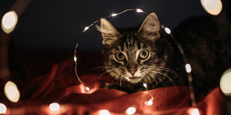 gato en túnel de luces