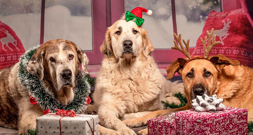 Cuidado con la alimentación de mascotas en las fiestas