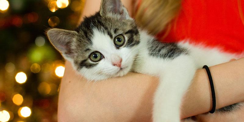 gato en brazos mascotas en navidad
