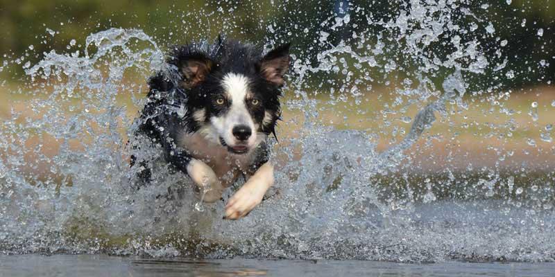 perro saltando en el agua