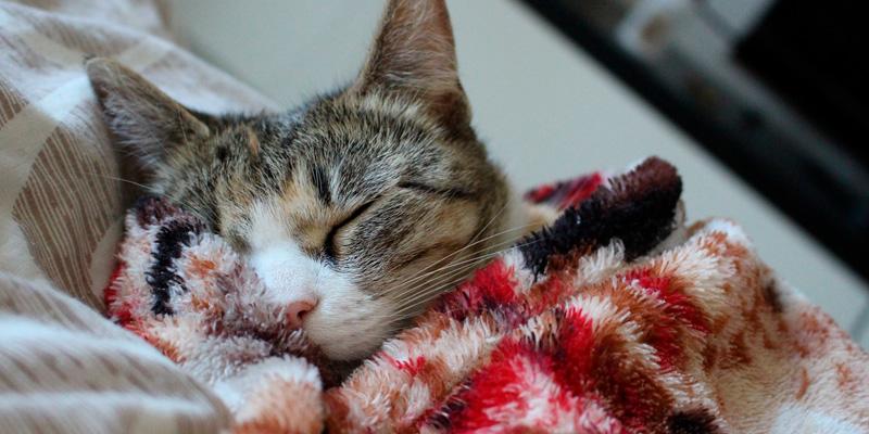 gato durmiendo abrigado