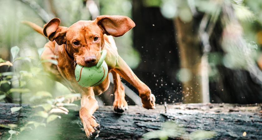 ¡Vuelta a clases peluda! Para qué sirve el adiestramiento canino