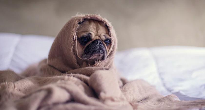 ¡Revisa cada año las vacunas para tu perro! Mira cuáles necesita