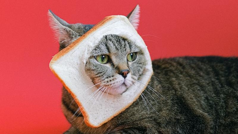 Por qué no darle cereales y verduras a tu gato