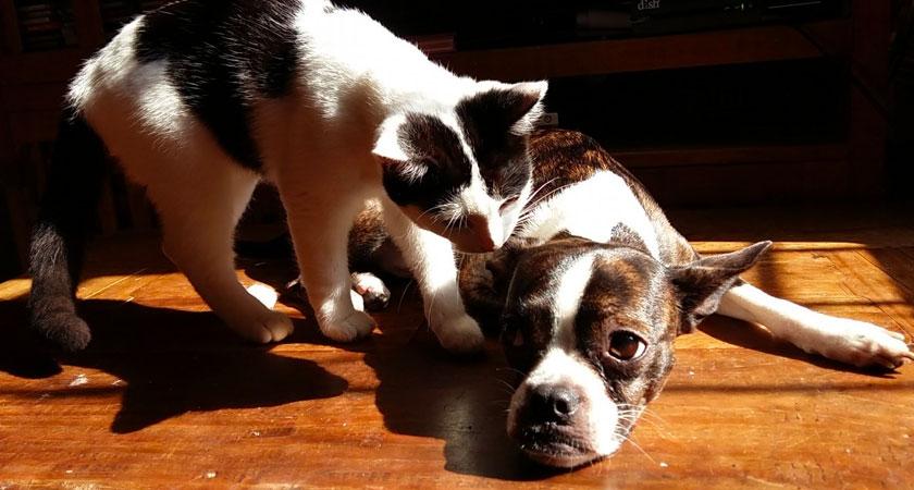 Conoce los mejores cuidados para mascotas en departamento