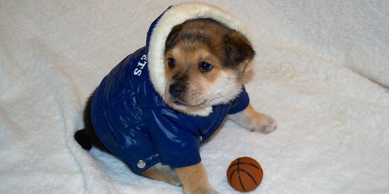 Un perro cachorro con una parka azul y chiporro, muy abrigado sobre una cama blandita con una pequeña pelota de juguete