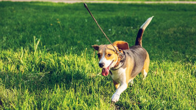 ¿Qué tiene que tener un buen paseo para los perros?