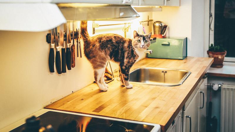 ¿Cómo evitar que un gato se suba a la mesa de la cocina?