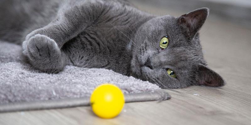 gato gris recostado en el piso junto a una pelota amarilla