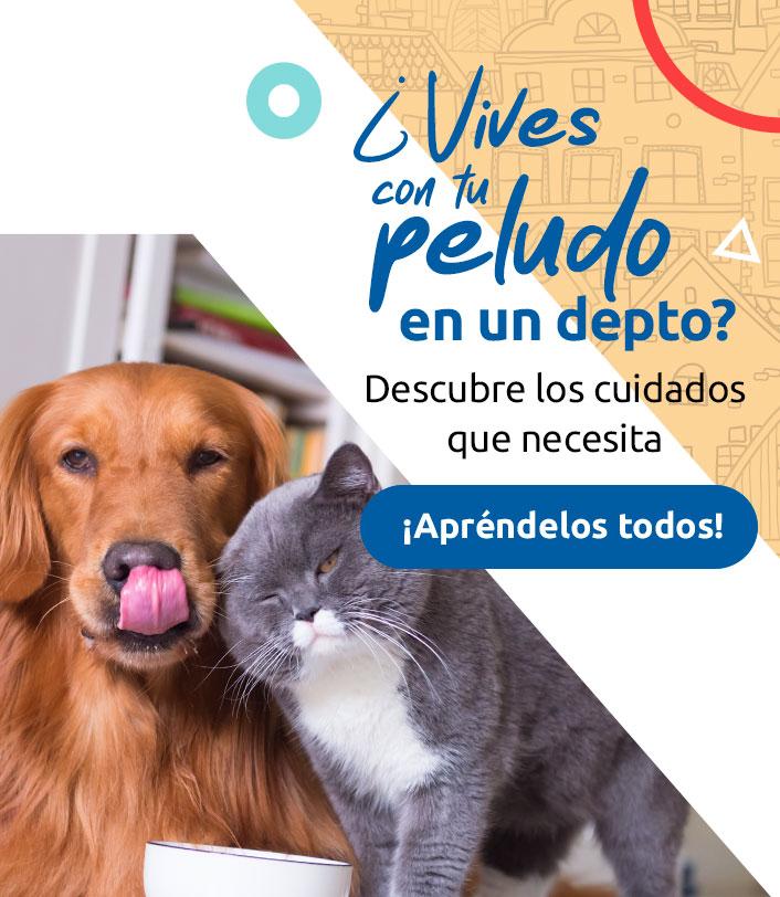 perro gato departamento