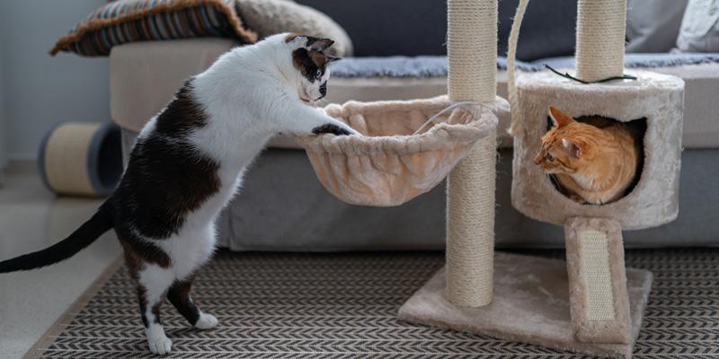 dos gatos jugando en un árbol para gatos