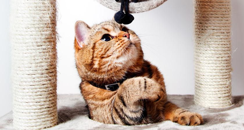 5 beneficios de los rascadores y árboles para gatos