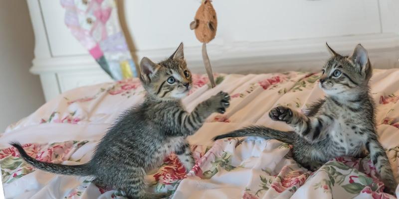 gatos cachorros jugando arriba de una cama