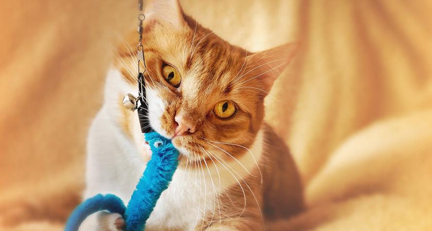 La importancia del juego para los gatos