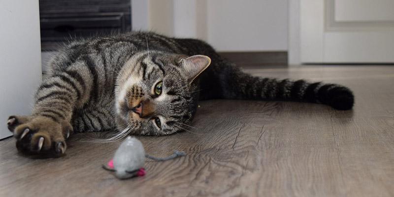 gato romano recostado en el piso con un ratón de juguete cerca