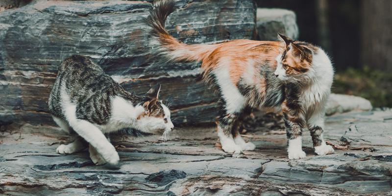 Dos gatos, uno detrás de otro, en un tronco recostado