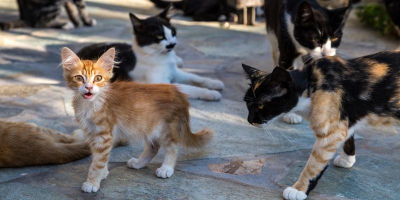 Manada de gatitos callejeros