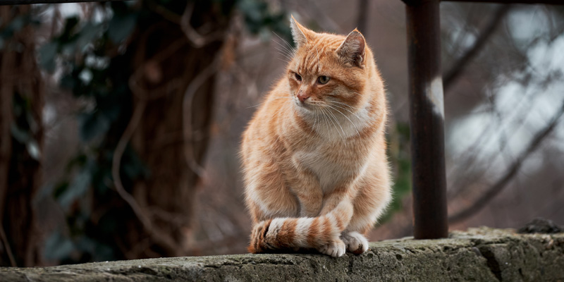 gato naranjo con blanco sentado arriba de un muro de concreto