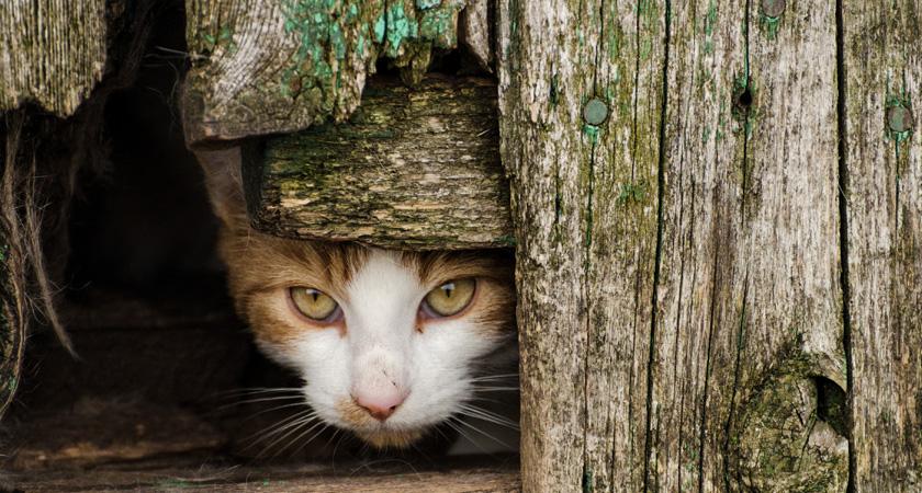 Qué es un gato feral y cómo adiestrarlo