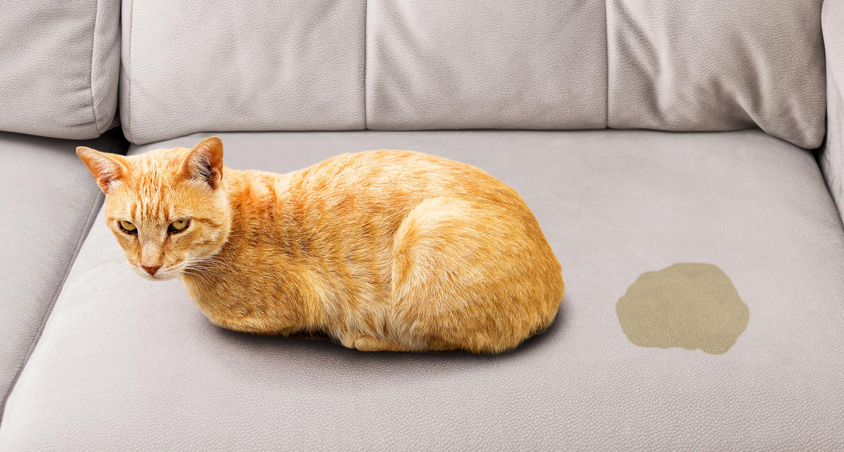Aprende a quitar el olor de orina de gatos