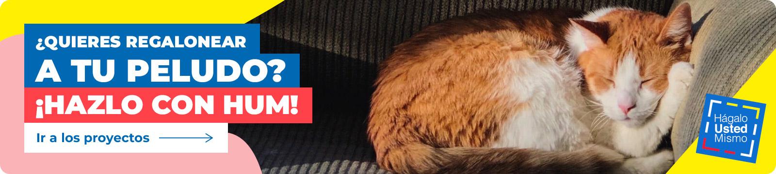 Gato naranjo con blanco recostado durmiendo en un sofá