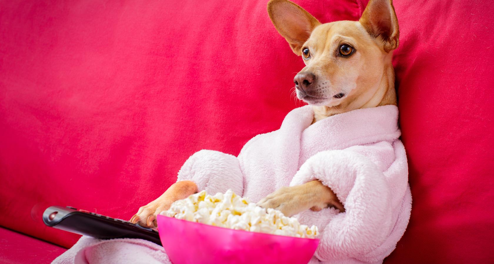 7 películas con perros protagonistas que tienes que ver