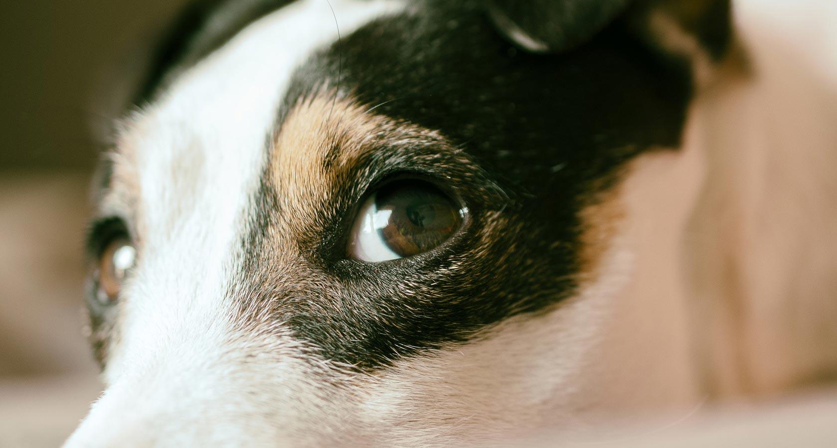 ¿De qué colores ven los perros? Aquí te lo contamos