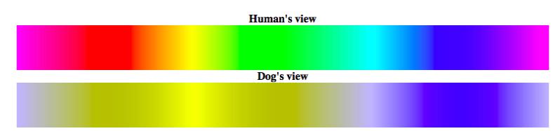 tabla que compara cómo el ojo humano ve los colores versus los perros