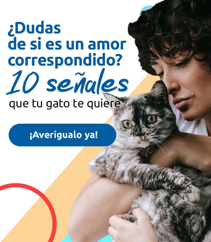 gato señales amor